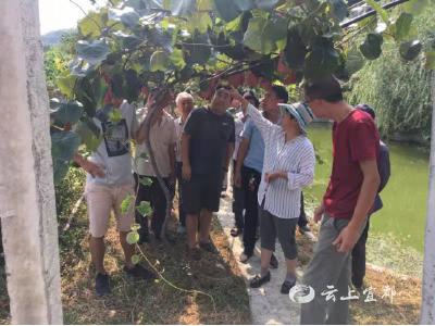 尖岩河猕猴桃产业园来了指导专家!