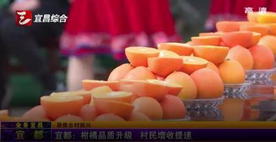 【三峡广电】宜都:柑橘品质升级 村民增收提速