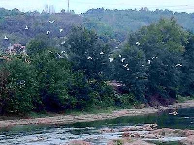 渔洋河边又见白鹭飞