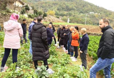 土豆架起国际桥——六国农业生产专家在白家淌村考察