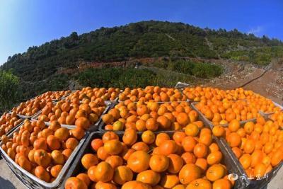 喜讯!我市国家柑桔产业综合标准化示范区高分通过验收