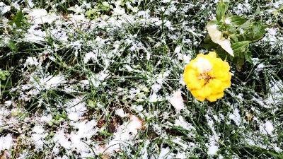 我市多地迎来今冬第一场降雪