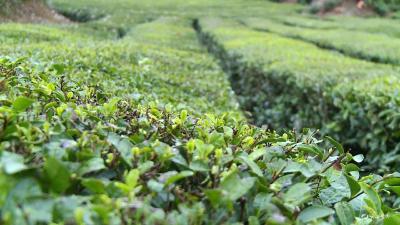 【不忘初心 牢记使命】聂家河镇:主题教育谋实效 助农增收兴产业