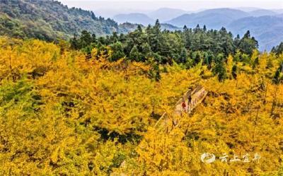 【湖北日报】宜都:万亩林场 层林尽染