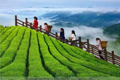 """【湖北日报】""""2019中国茶业百强县""""揭晓,湖北15个县市区入榜"""