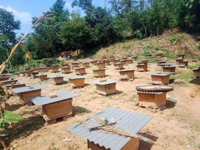 """白马溪村:中蜂养殖+黄桃种植 特色产业发展解锁""""致富密码"""""""