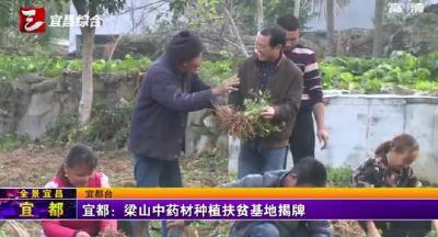 【三峡广电】宜都:梁山中药材种植扶贫基地揭牌