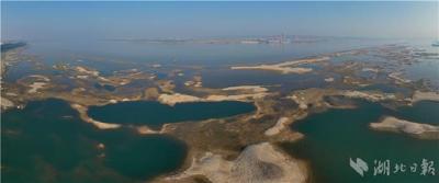 【湖北日报】长江枯水期滩涂湿地成鸟类乐园