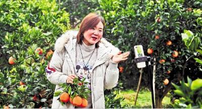 【湖北日报】宜都村官直播卖脐橙
