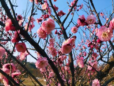 梅花已开 春天将来