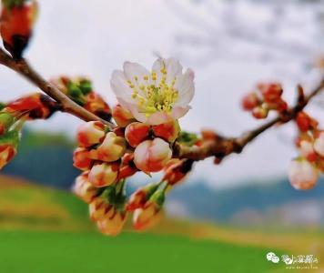 拥抱春天!