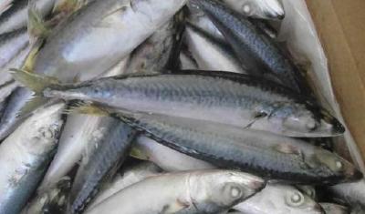 武汉:降低起订量,力促鲜鱼消费进社区全覆盖