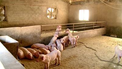 市畜牧服务中心多措并举 促生猪稳产保供