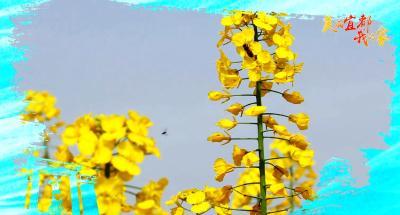 """""""云赏花""""!我们把宜都的春天送给你~"""