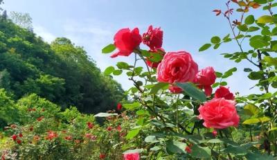 三峡九凤谷景区加入三峡旅游年卡,一起来网红景区打卡吧!