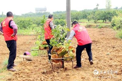 产业扶贫栽下希望树