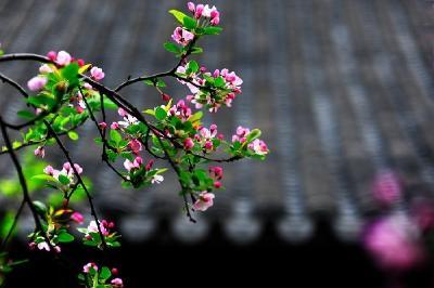 建始工业园区箍紧守牢安全防线 平安幸福迎新春