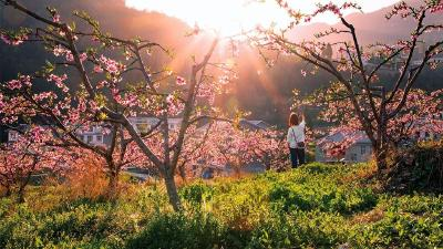 人间四月芳菲尽,当阳桃花始盛开