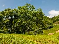 美轮美奂杨树坪