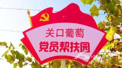 """村坊村:""""党建+产业""""壮大""""关口葡萄"""""""