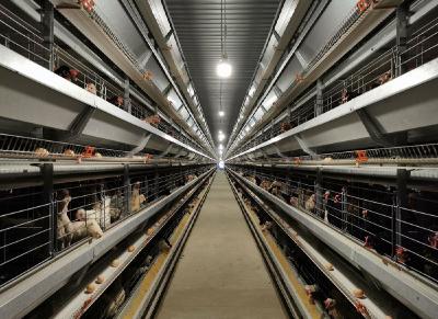 东西部扶贫协作(滨江—建始)蛋鸡养殖场正式揭牌