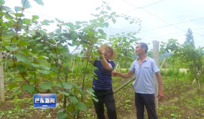 薛维莽:返乡发展产业 带领村民脱贫致富