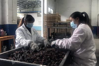 销售250万元  福硒康农业科技有限公司赶制订单忙