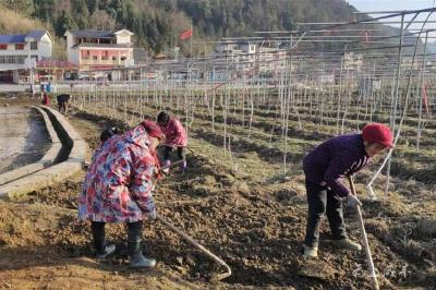 咸丰:开春去赏花海,1万颗来自杭州的郁金香种球刚刚种下