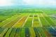 农业部公布首批境外农业合作示范区试点名单 湖北项目入选