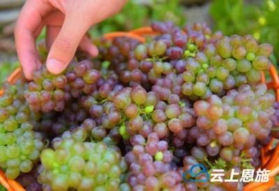 宣恩预计今年水果总产量近13万吨,总产值3.1868亿元