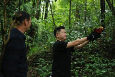 宣恩县林业局对查获的红腹锦鸡进行野外放生