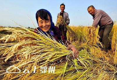 灾害损失灾后补  市农委硬指标托起农民丰收希望