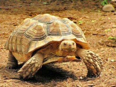 【市长信箱】关于陈先生咨询非营利性陆龟养殖问题的办理情况