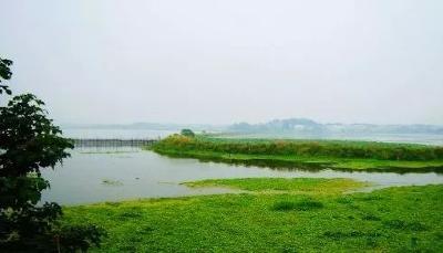 大动作!鄂州政府回购花马湖上湖面积2572亩,要干嘛?