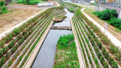 小桥港环境综合整治项目加紧建设