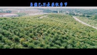 张远村的蓝莓果