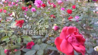 国庆花市市场火热  鲜花扮靓生活