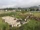 森达木业项目依法进行建设清场