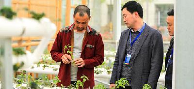 恩施来凤:无土栽培新技术 创造农业新活力