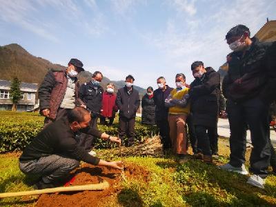 鹤峰:产业送到家门口 村民再添致富路