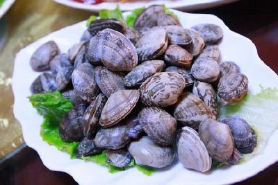 中国蛤蜊2016年产量创历史新低 开始人工繁育