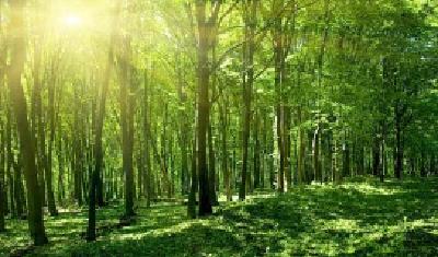 关于开展森林病虫害飞机防治作业的公告
