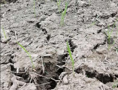 沙洋柴集村:修路毁了水渠 农田灌溉成难题