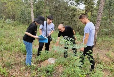 钟祥市审计局聚焦林场病虫害防治专项资金使用情况