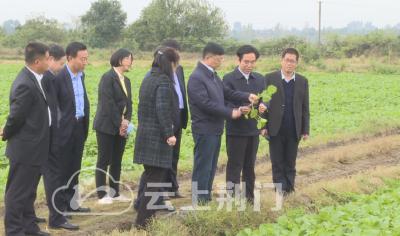 荆门市已完成秋冬播面积218万亩