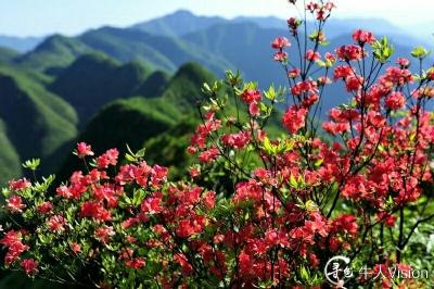 龙角山: 走龙脊 看杜鹃