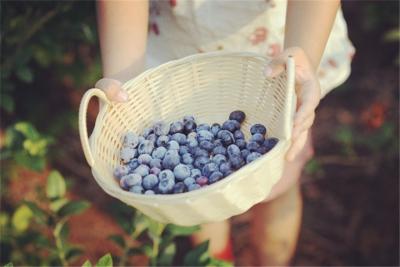 谁说农村只有红薯大白菜呢,千亩的蓝莓园你们来过吗?