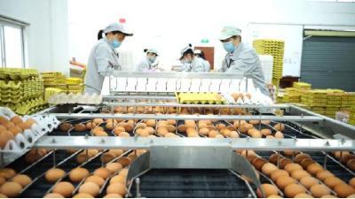 保供30天、3000000多枚!武汉10万医患每天都有1枚爱心鸡蛋吃