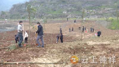 义务植树添新绿 胡集镇开展义务植树活动