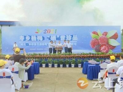 2021湖北·钟祥第四届杨梅节暨富硒农产品推介活动正式启幕